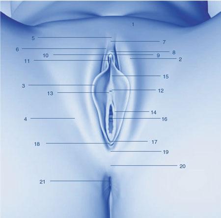 آناتومی واژن یا کس یا فرج زن